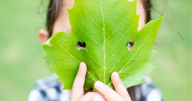木のぬくもりを感じる自然を感じる